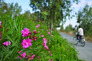 bisiklet_izmir_ozanilginoglu_com (4)